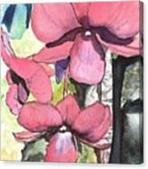 Kiahuna Orchids Canvas Print