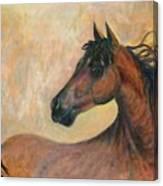 Kiger Mustang Canvas Print