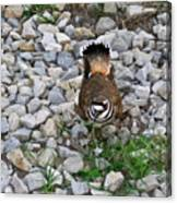Kildeer And Eggs Canvas Print