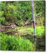 Kill Creek 8388 Canvas Print