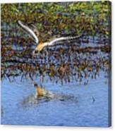 Killdeer Coming In For A Landing Canvas Print