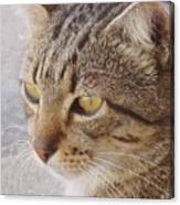 King Cat Canvas Print
