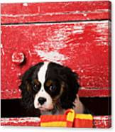 King Charles Cavalier Puppy  Canvas Print