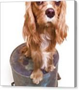 King Charles Spaniel Puppy Canvas Print