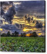 King Cotton Sunset Art Statesboro Georgia Canvas Print