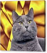King Kitty With Golden Eyes Canvas Print