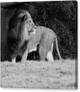 King Of Beasts Black And White Canvas Print