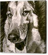 King Of The Dogs Canvas Print