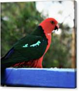 King Of The Parrots Canvas Print