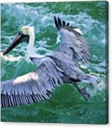 King Pelican Canvas Print