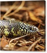 King Snake 2 Canvas Print