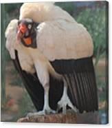 King Vulture 1 Canvas Print