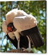 King Vulture 3 Canvas Print