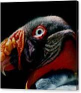 King Vulture Canvas Print
