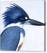Kingfisher Portrait Canvas Print