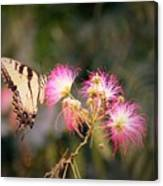 Kiss Of Butterfly Canvas Print
