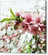 Kiss Of Spring Canvas Print