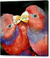 Kissing Birds Canvas Print