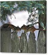 Kissing On A Fence Canvas Print