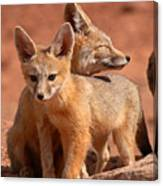 Kit Fox Mother Looking Over Pup Canvas Print
