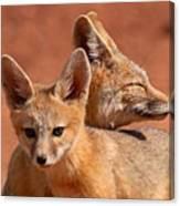 Kit Fox Pup Snuggling With Mother Canvas Print