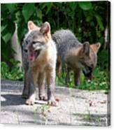 Kit Fox12 Canvas Print