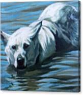 Kita Swimming The Platte Canvas Print