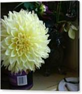 Kitchen Dahlia Canvas Print
