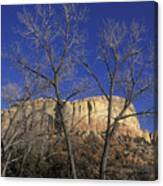 Kitchen Mesa And Bare Cottonwood Trees Canvas Print