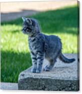 Kitten 1 Canvas Print