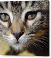 Kitten Curiosity Canvas Print