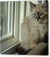 Kitten Daydreams Canvas Print