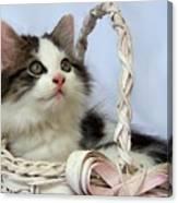Kitten In Basket Canvas Print