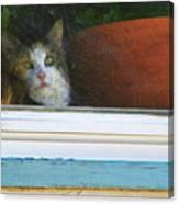 Kitten In The Window 2 Canvas Print