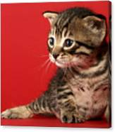 Kitten On Red Canvas Print