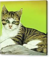 Kitten On Rock Canvas Print