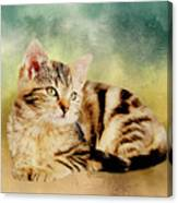 Kitten - Painting Canvas Print