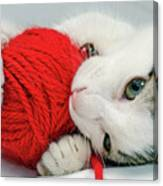Kitten Playing With Red Ball Of Yarn Canvas Print