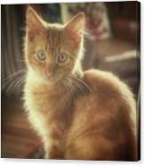 Kitten Portrait Canvas Print
