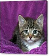 Kitten, Purr-fect In Purple Canvas Print