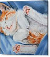 Kitten Sleeping Canvas Print