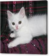 Kitten Snow White On Green And Pink Plaid Canvas Print