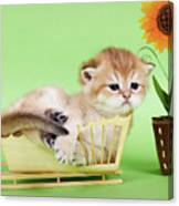 Kitten With Flover Canvas Print
