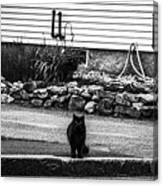 Kitty Across The Street Black And White Canvas Print