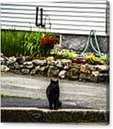 Kitty Across The Street  Canvas Print