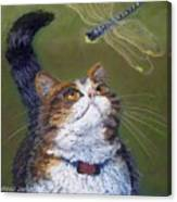 Kitty And The Dragonfly Close-up Canvas Print
