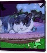Kitty Blue Canvas Print