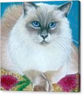 Kitty Coiffure Canvas Print