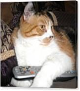 Kitty Control Canvas Print