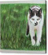 Kitty Grass Canvas Print